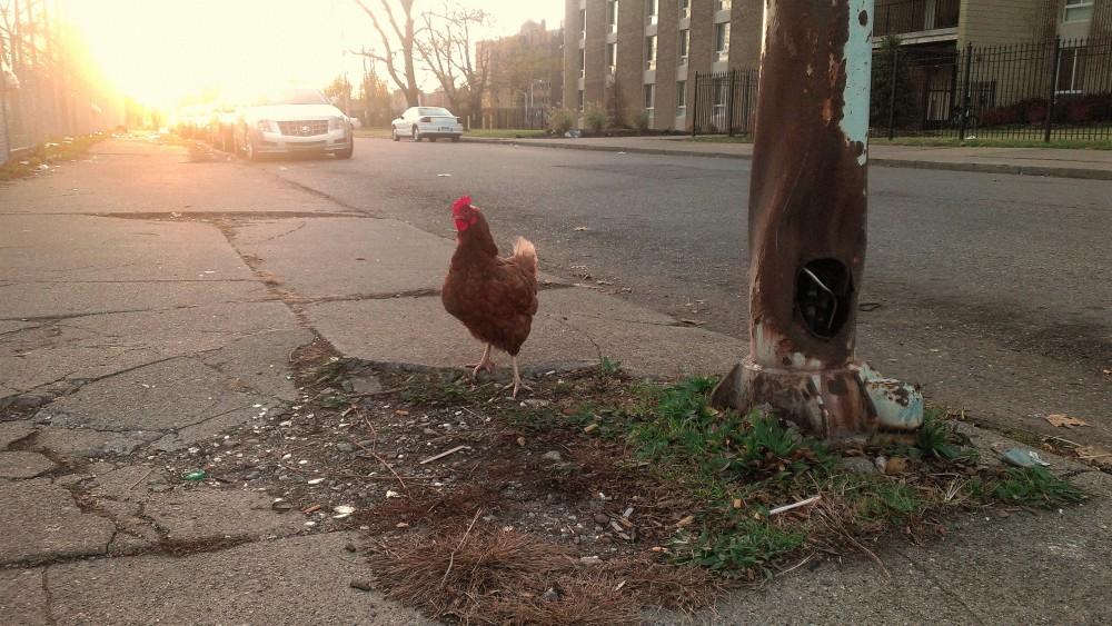 Detroit street chicken